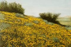 Arizonahillside-scaled