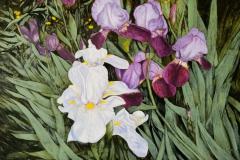 Irises-scaled