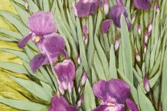 Purpleirises-scaled