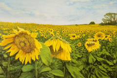 Sunflowers-scaled