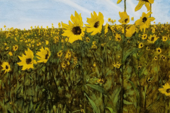 Wildsunflowers-scaled